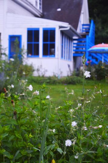 House_&_Flowers_2